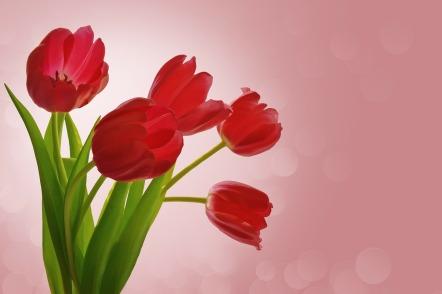flowers-84457_1920