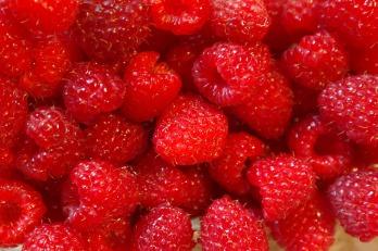 raspberries-227976_960_720