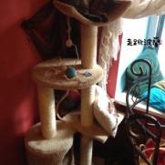 貓咪在貓跳台上睡覺哦!
